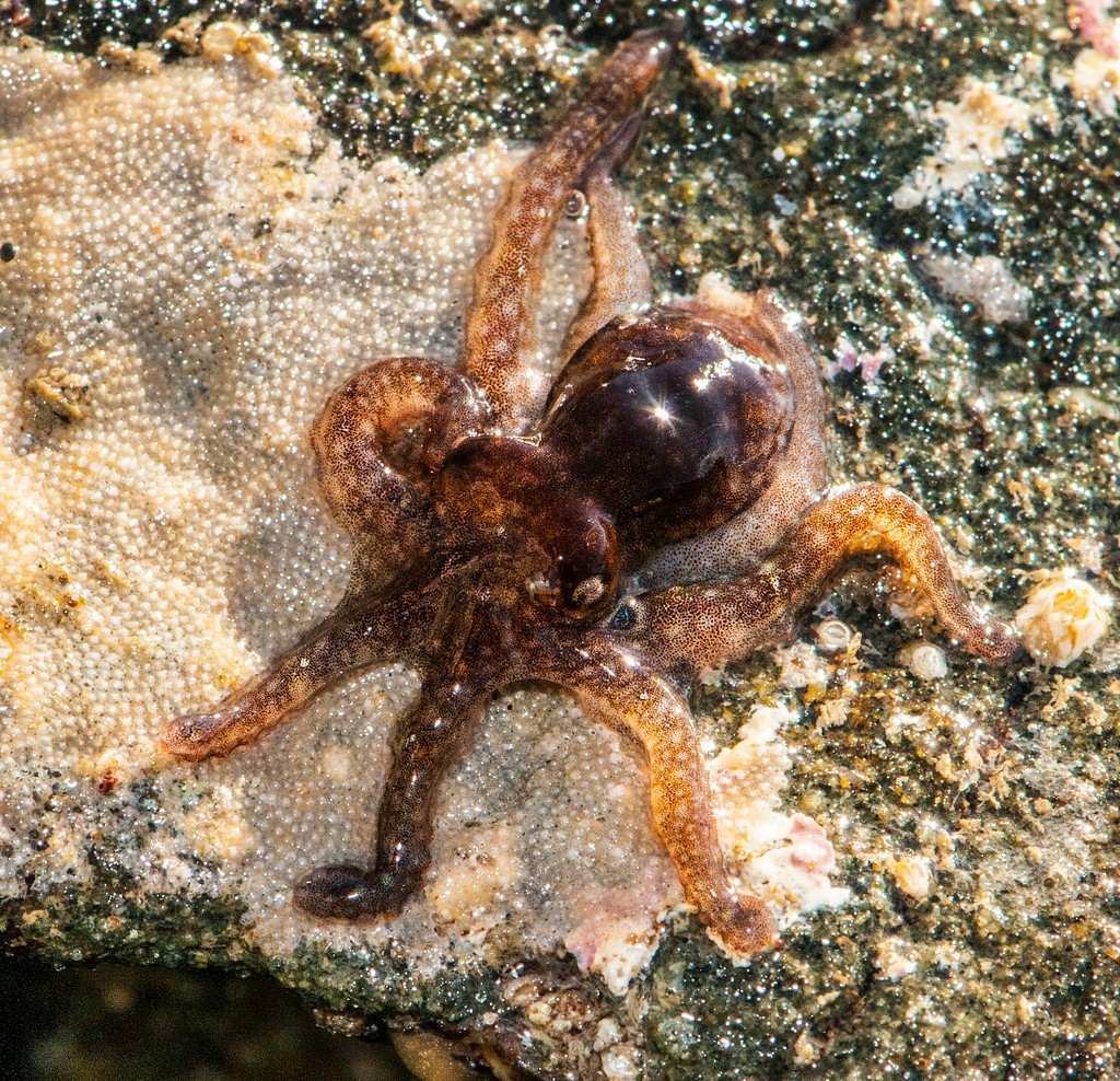 What the octopus genome can tell us