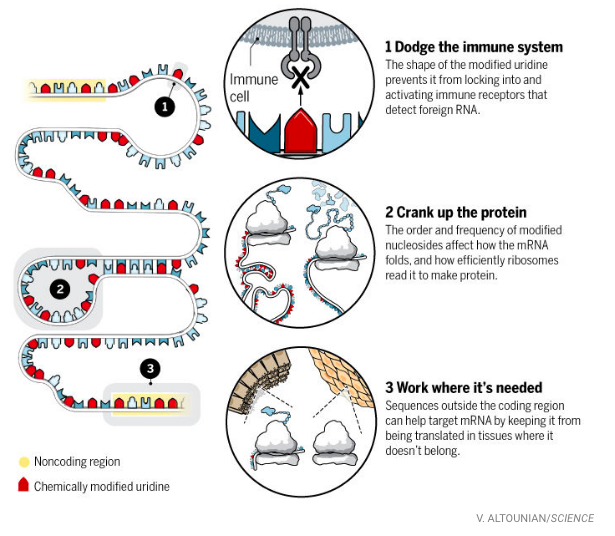 steps-mRNAdevelop.png